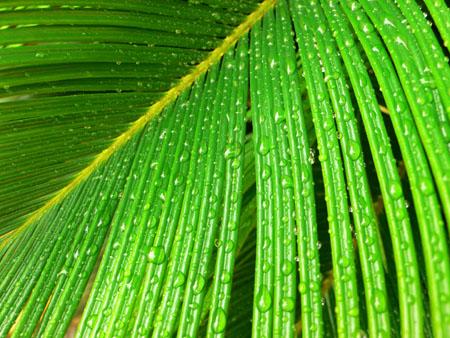 oui l 39 huile de palme certifi e biologique rspo next avantage huile de palme nutrition. Black Bedroom Furniture Sets. Home Design Ideas